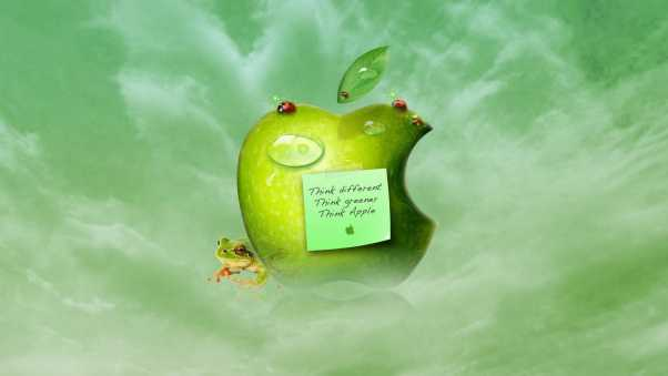 apple, green sticker, insect