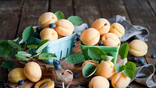 apricots, blueberries, dishes