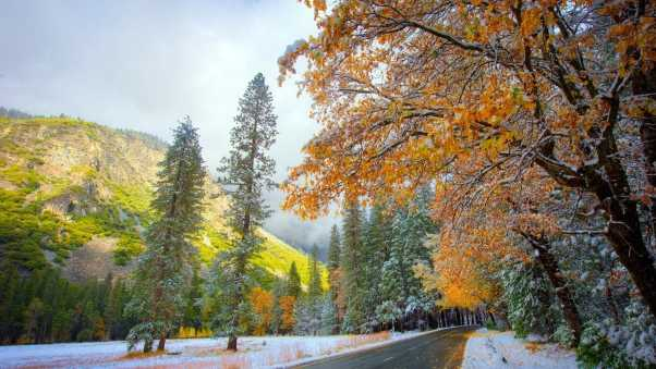 autumn, winter, snow