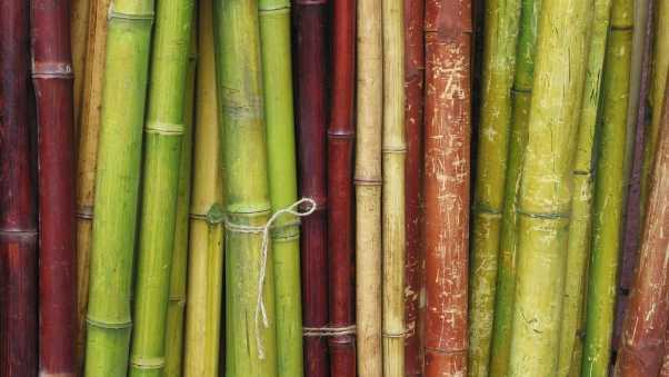 bamboo, sticks, branches