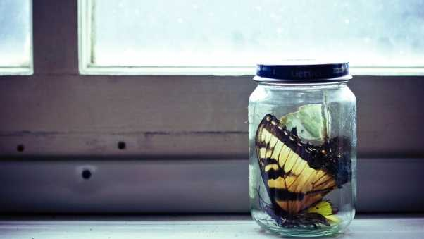 bank, glass, butterfly