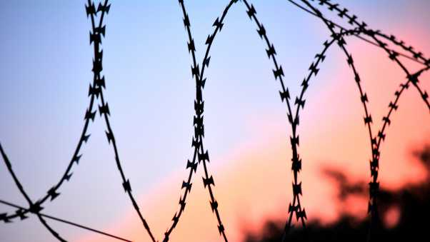 barbed wire, netting, fencing