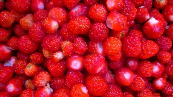 berry, many, sweet