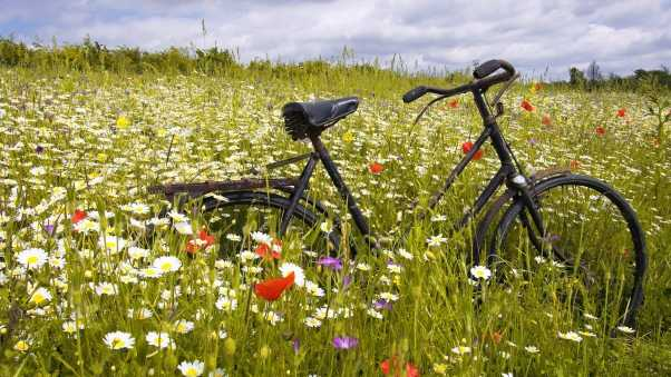 bicycle, glade, flowers