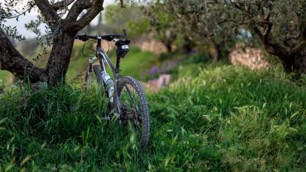 bicycle, grass, trees