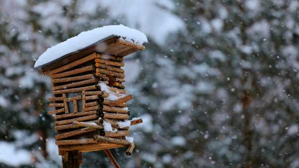 birdhouse, snow, winter