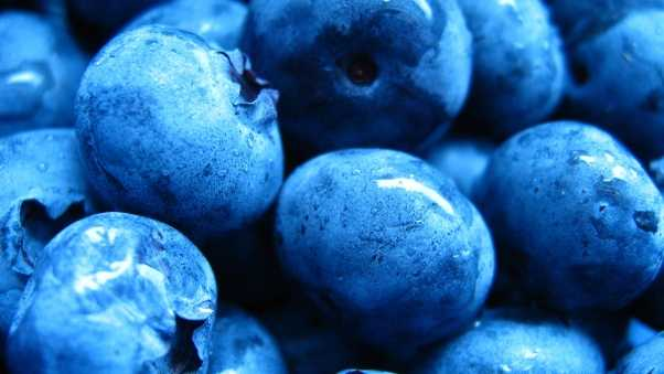 blueberries, berries, moist