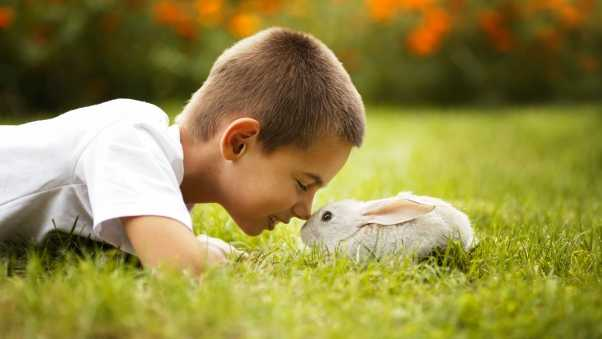 boy, rabbit, grass