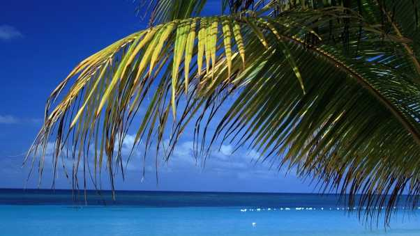 branch, palm tree, blue water
