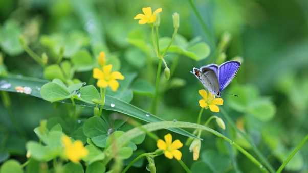 butterflies, flowers, grass