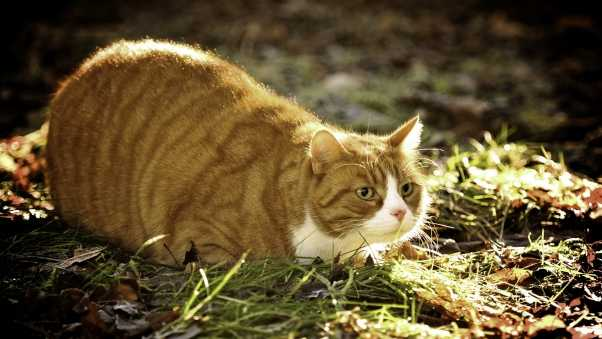 cat, grass, fat