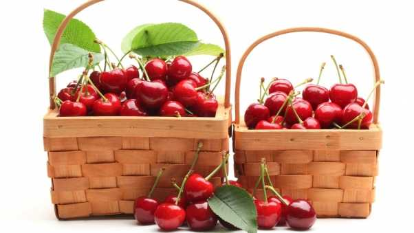 cherry, baskets, crop