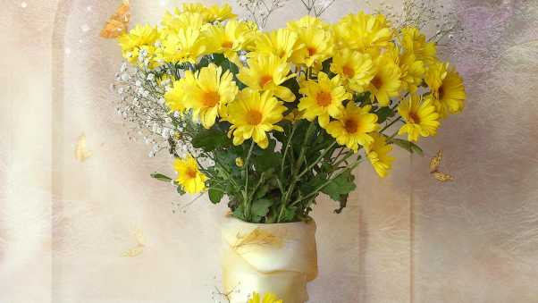 chrysanthemums, yellow, flowers