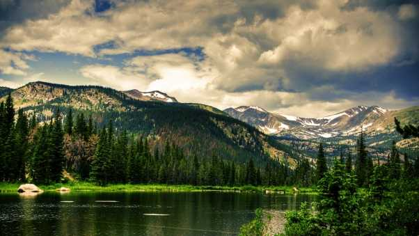 coniferous forest, mountains, height