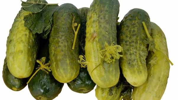 cucumbers, pickles, salted