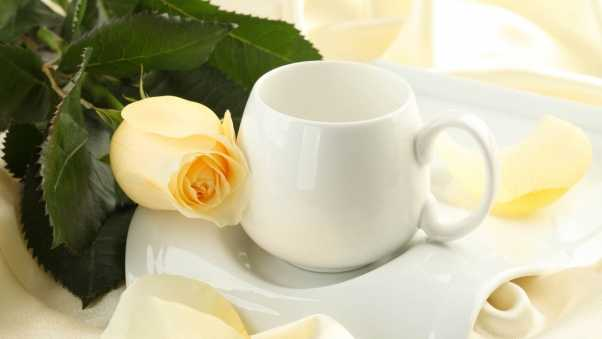 cup, flower, rose