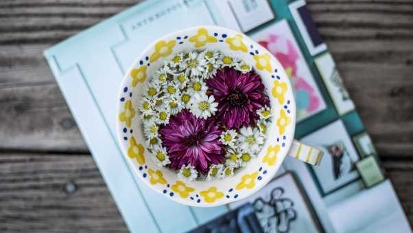 cup, flowers, daisies