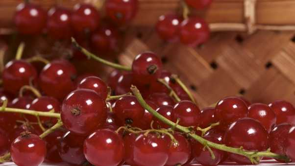 currant, berry, basket