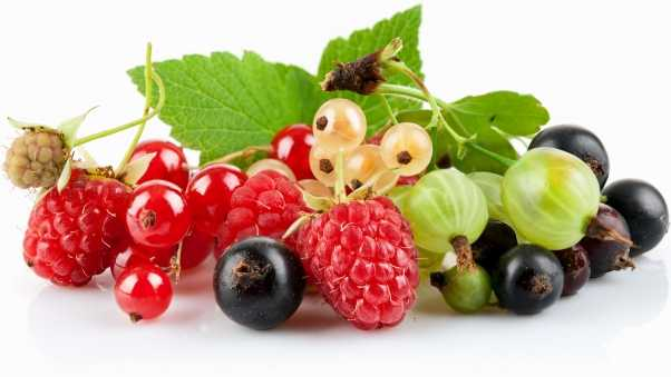 currants, gooseberries, berries