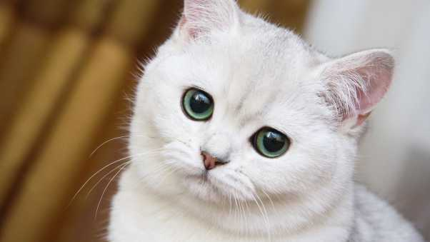 cute, white cat, muzzle