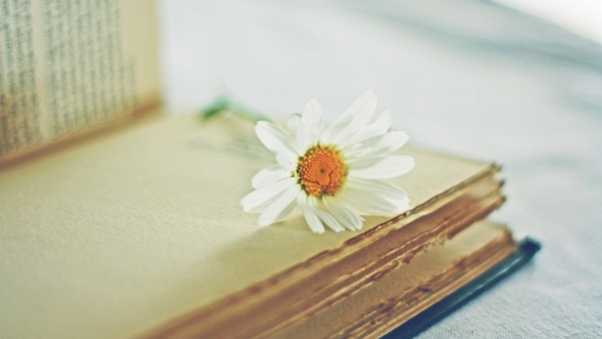 daisy, flower, book