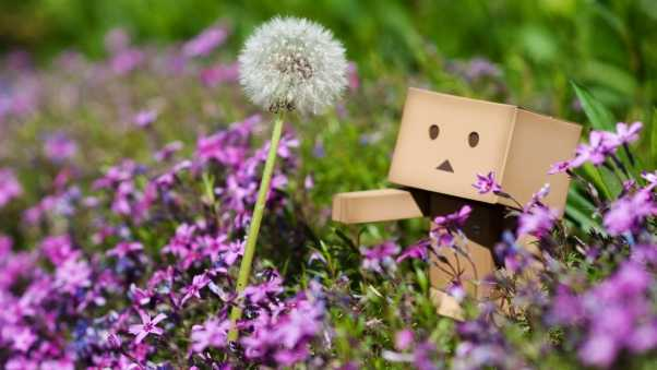 danboard, dandelion, walking