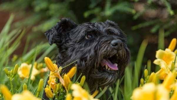 dog, flowers, face