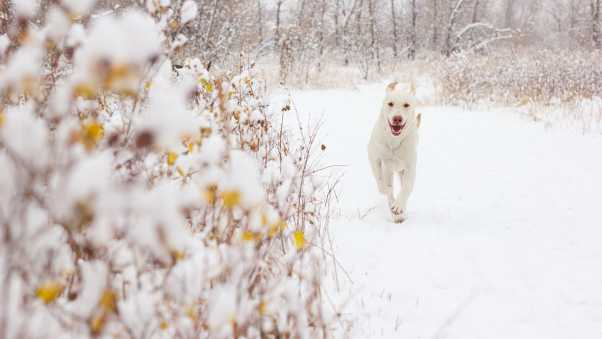 dog, snow, background