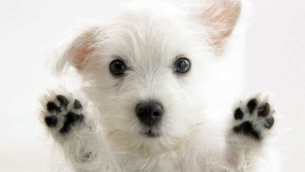 dogs, furry, paws