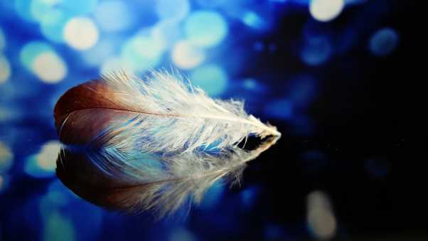 feather, reflections, close-up
