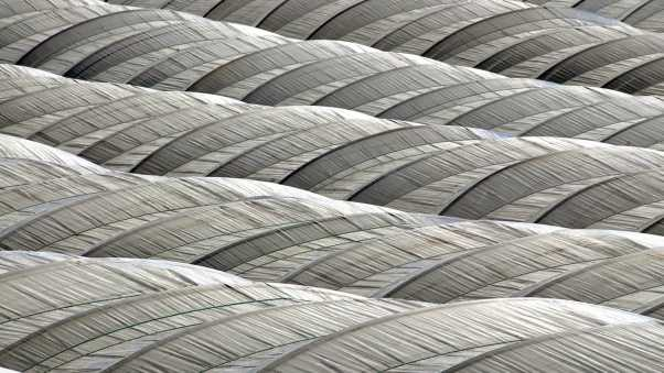 feathers, gray, surface