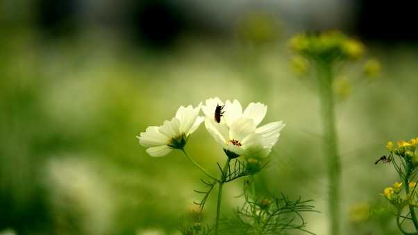 flower, insect, grass