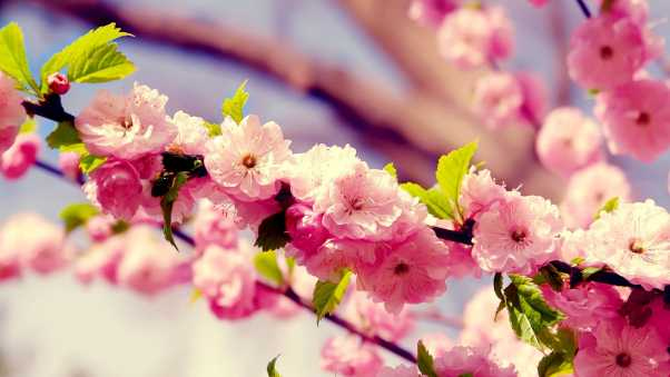 flowers, branches, blossoms