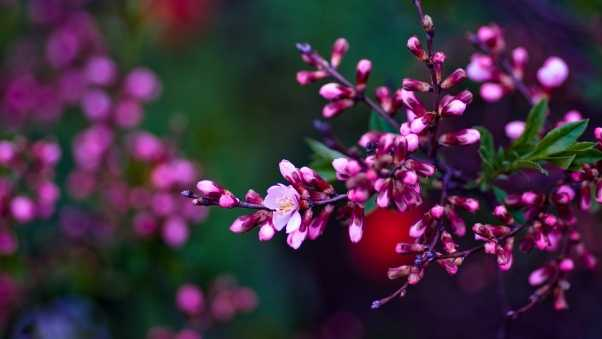 flowers, branches, color