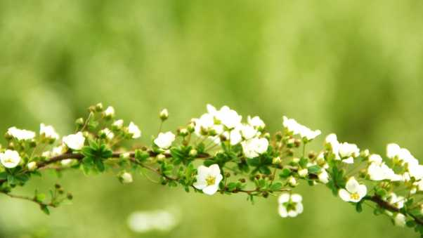 flowers, branches, plants