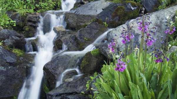 flowers, greenery, waterfalls