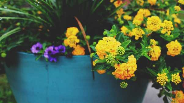 flowers, pot, yellow