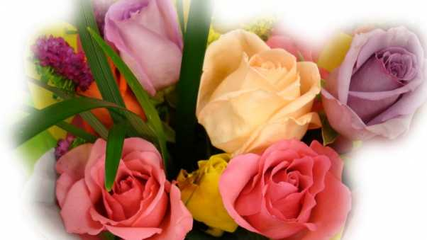 flowers, roses, buds