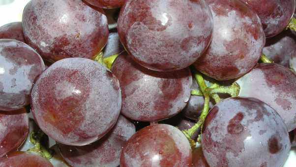 food, grapes, close up
