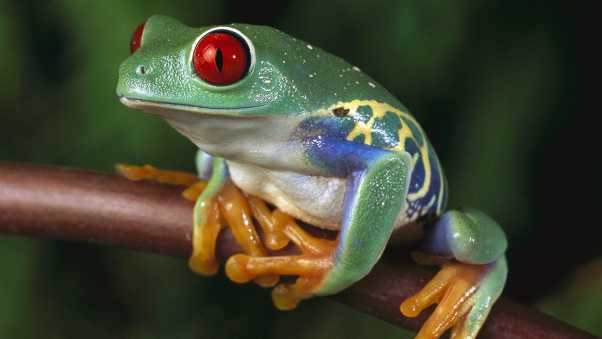 frogs, color, colorful