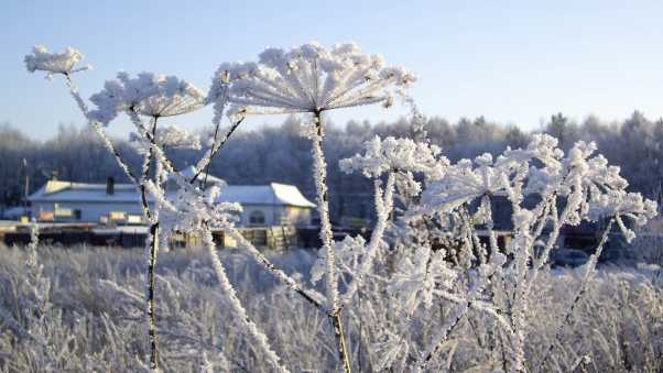 frost, winter, hoarfrost