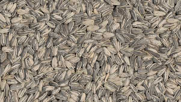 grains, seeds, surface