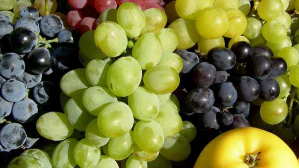 grapes, fruit, allsorts