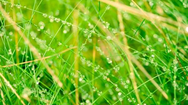 grass, network, drops