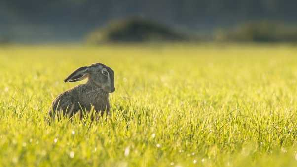 hare, grass, funny