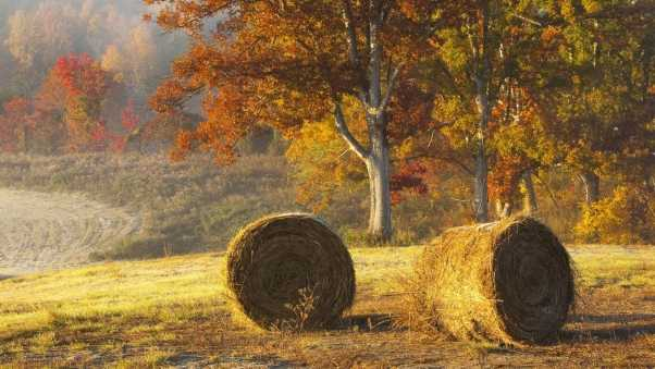 hay, bales, agriculture