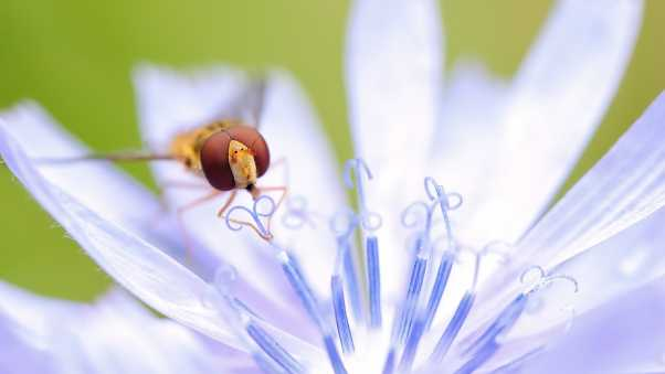 insect, flower, petals