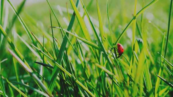 insect, grass, climb
