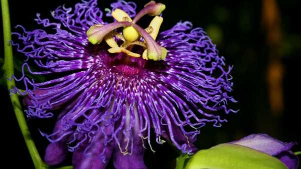 inspiration, passion, flower