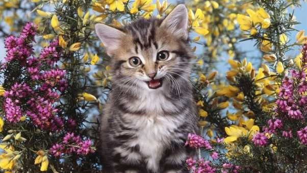 kitten, flowers, creek